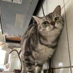 桃園市議員謝美英貓咪救援送養15