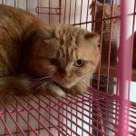 桃園市議員謝美英貓咪救援送養30