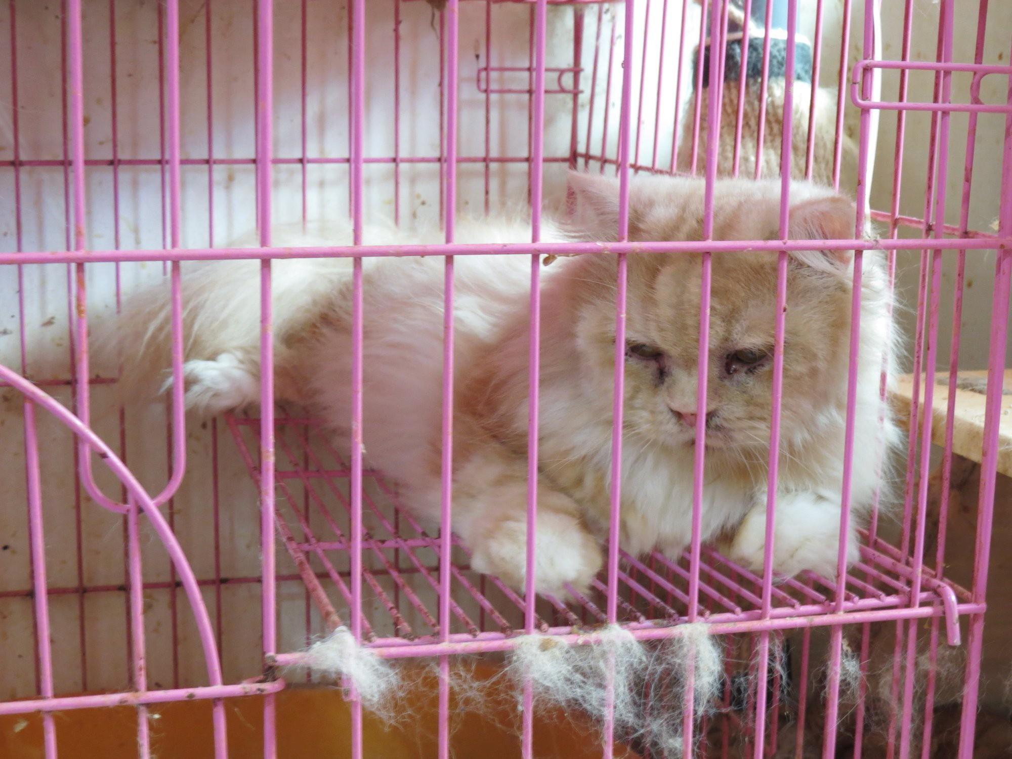 桃園市議員謝美英貓咪救援送養4