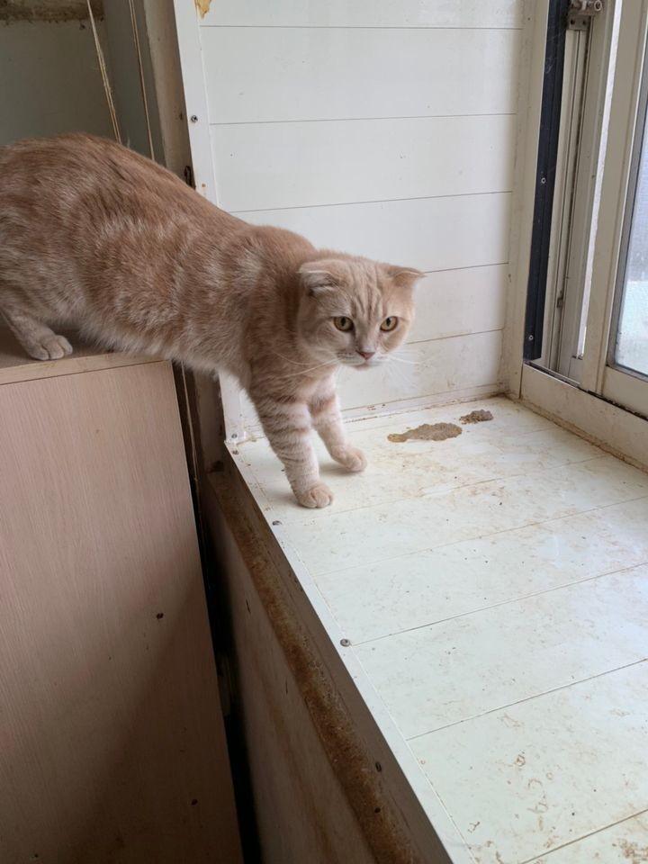 桃園市議員謝美英貓咪救援送養6