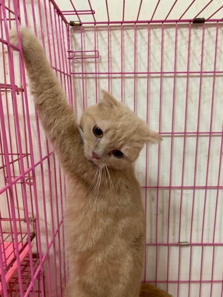 桃園市議員謝美英貓咪救援送養
